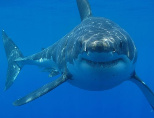 My Conversation With Brian Skerry Author Of The Ultimate Book of Sharks (National Geographic Kids)