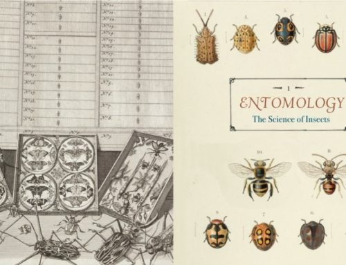 My Conversation With Dr. Michael Engel, Author Of Innumerable Insects: The Story Of The Most Diverse And Myriad Animals On Earth (Natural Histories)